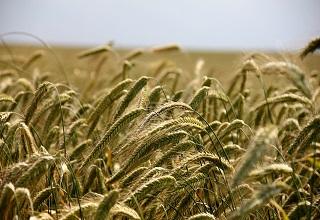 FINACTU remporte l'appel d'offres lance par la BOAD pour le développement de l'assurance agricole en zone UEMOA