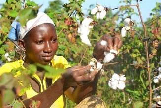 Sénégal : FINACTU conforte sa position de leader de l'assurance agricole